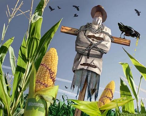 8 април: Ден против заплахата от ГМО - алергии, токсини в черния дроб
