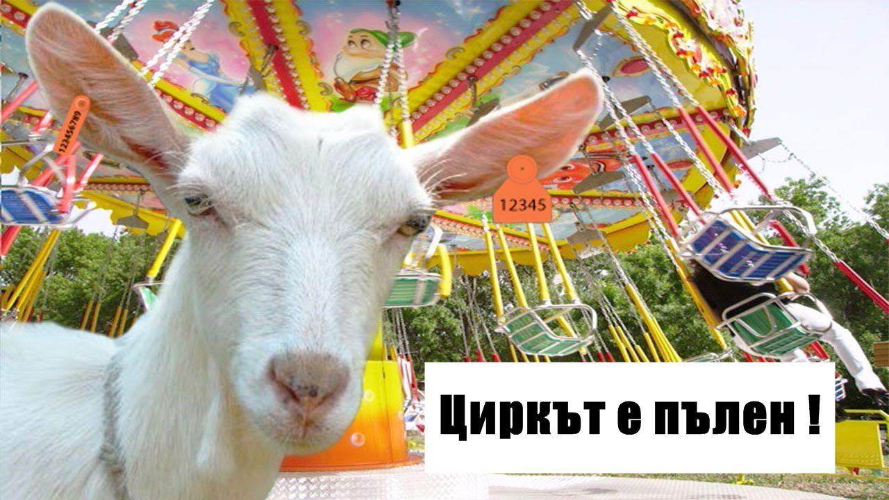 Два месеца няма умряло животно от стадото на Ани и Тодор!