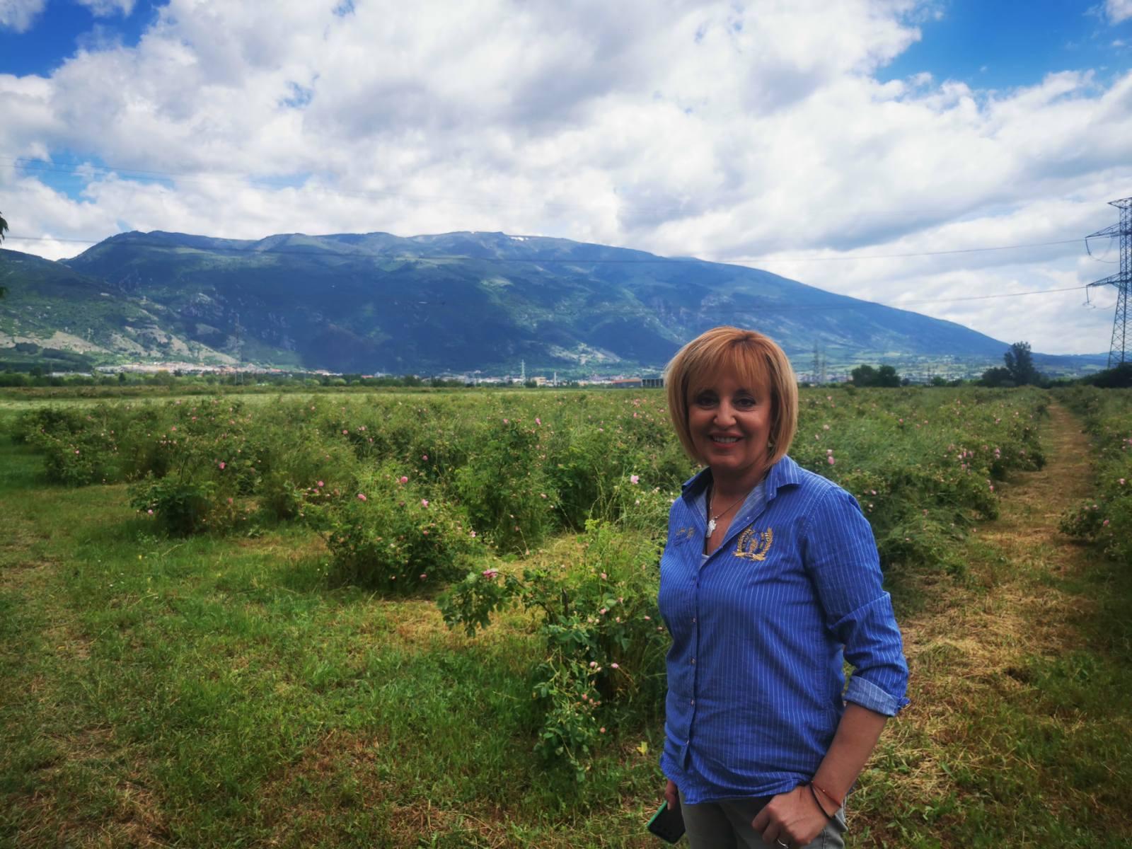 Манолова: Земеделският министър да реши трайно проблемите на розопроизводителите